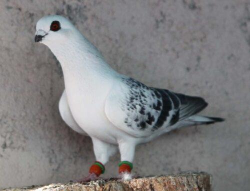شركة مكافحة الحمام ابوظبي |0559505474  |مكافحة الطيور