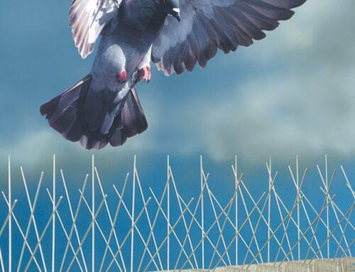 شركة مكافحة الحمام دبي |0559505474  |مكافحة الحشرات